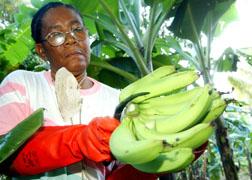 Banana Farmer Winfa Simon Rawles